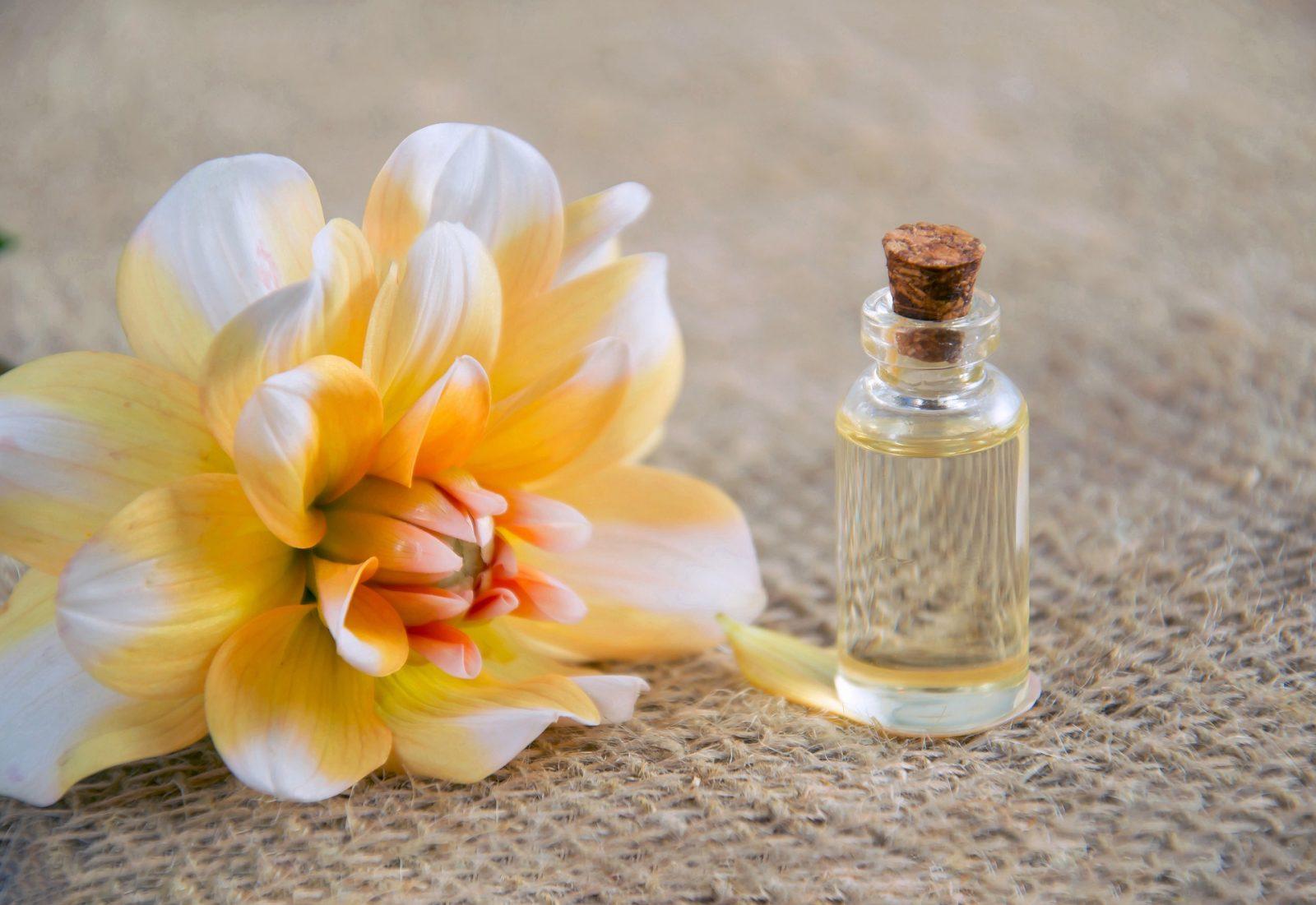 Programme Formation Juillet avec le cabinet Fleur de Vie